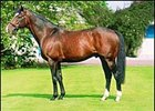 Sadler's Wells Captures Record 13th Consecutive Sire Title