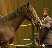 Pleasant Colony Colt Sells For $400,000 At Keeneland
