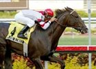 Grade I Winner Splendid Blended Retired