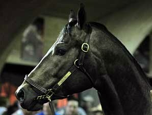 A.P. Indy Colt Tops Adena Springs Sale
