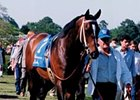 Blumin Affair, Third in the Derby, Dies