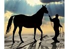 Equine Lending's Stormy Climate