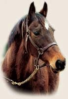 Champion Waya Euthanized at 27