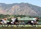 Oak Tree Meet Lifted by Breeders' Cup