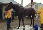 American Pharoah at Churchill Downs May 25