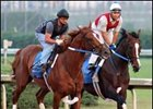 Curlin, Hard Spun Turn in Sharp Works for Haskell