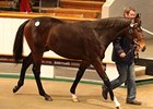Galileo Yearlings Top 'Tatts' December Sale