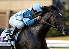 Stakes Producer Nightstorm Dead
