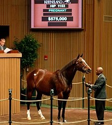 Keeneland Nov. Sale Gross Tops 2010 Total
