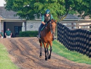 Big Brown Galloping at Three Chimneys