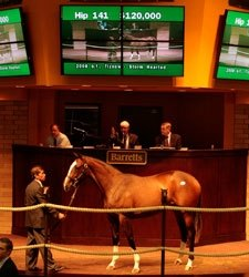 Tiznow Filly Tops Barretts Cal Cup Sale