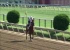 Preakness Stakes: Dortmund at Pimlico May 14