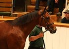 Tattersalls Book 2 Enjoys Strong Opening