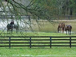 Unwanted Horses: How Serious a Problem?