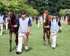 Japanese Breeders Cautiously Optimistic for JRHA Sale