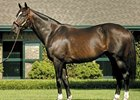 WinStar Announces 2009 Stud Fees