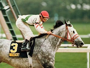 Waquoit's Sloppy Gold Cup Remembered