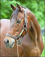 Private Account, Personal Ensign's Sire, Dead