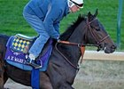 Strong Bernardini Contingent in Breeders' Cup