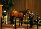 Don Gato Brings $800,000 at Keeneland