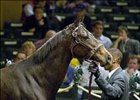 Sweet Talker Sells for $1,150,000 at Keeneland Wednesday