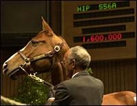 Storm Cat Filly Brings $1.7 Million at Keeneland
