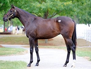 Last Storm Cat Sale Offspring Brings $285,000