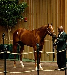 Keeneland Sale: Bullish at Top, But Selective