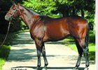 Roman Ruler Sires First U.S. Winners