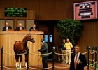Distorted Humor Colt Brings $2.050 Million
