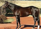 Tropical Storm Sires First Winner