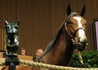 Malibu Moon Colt Brings $300,000 Sept. 19