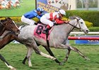 Hit It Rich Gets Up Late to Win Orchid Stakes
