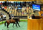 Bernardini Yearlings Bring $750,000, $600,000