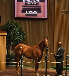 Irish Agent McCormack Buys Street Cry Colt
