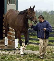 Sweet Catomine Retired; Will Be Bred to A.P. Indy