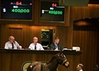 Harlan's Holiday Filly Sells for $400,000