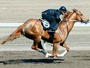 Lion Heart Colt, Others Top Workouts