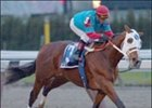 Toccet May Miss Kentucky Derby
