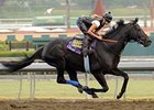 Baffert Hopes for Big BC with Trio