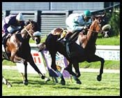 Wonder Again Prevails in Garden City Handicap