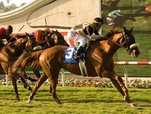 Magical Fantasy Heads Field for Yellow Ribbon