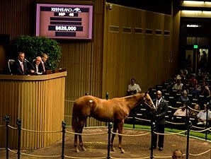 Half Brother to Halfbridled Brings $625,000