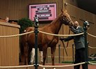 Pure Clan Sells for $4.5 Million at Keeneland