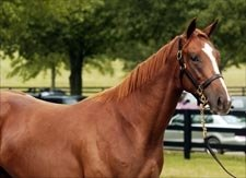 Yearling Fever: What's Hot at the Fasig-Tipton Kentucky Select Sale