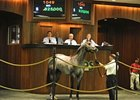 Macho Uno Colt Tops OBS Sale at $825,000