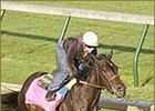 Grade II Winner Santa Catarina Retired