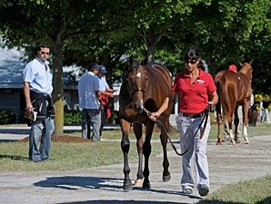 Halftime No Relief at Keeneland Sale