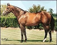 A.P. Indy at $300,000, Kingmambo at $200,000, for 2002