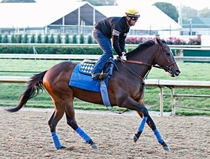Bodemeister Headed to Pimlico for Preakness